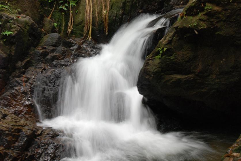 Przyroda Phuket