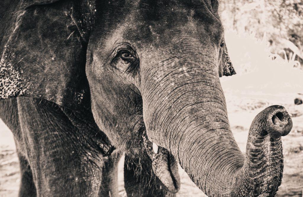 slonie w tajlandii
